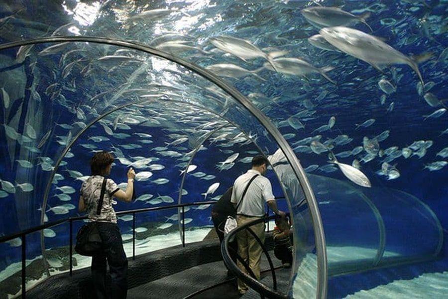 آکواریوم اقیانوسی شهر شانگهای