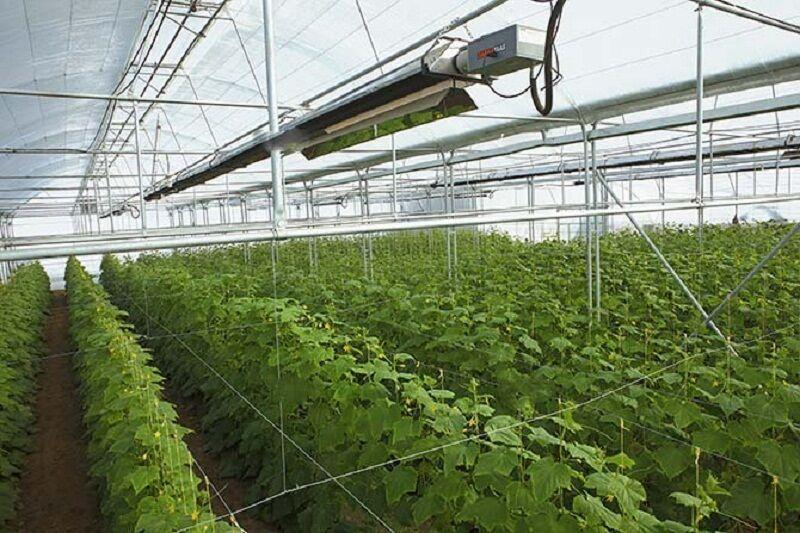 خبرنگاران استاندار اردبیل: محصولات گلخانه ای پارس آباد صادر می گردد