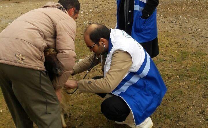 شروع فاز سوم واکسیناسیون تب برفکی طیور در شهرستان ماکو