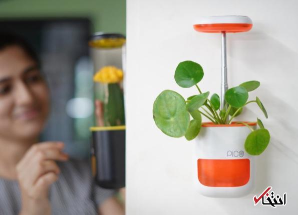 گلدان هوشمند پیکو ستاره خانه شما می گردد
