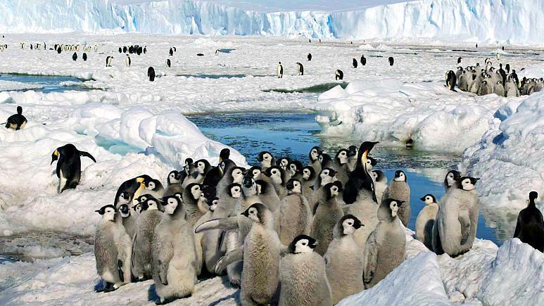 کشف گلّه های جدید پنگوئن در قطب جنوب