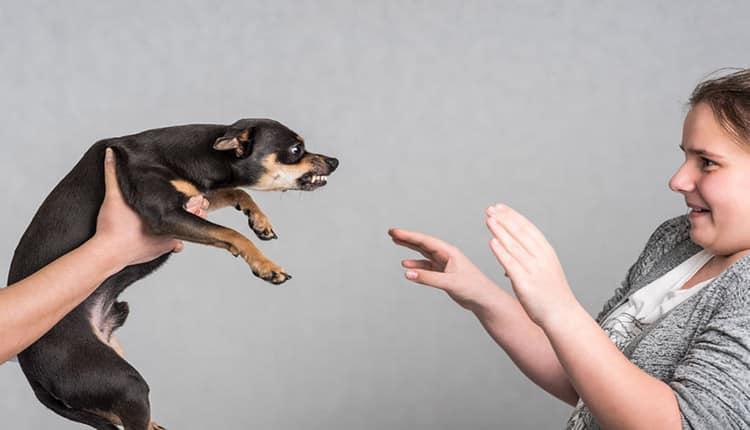 ترس از سگ چه دلایلی دارد و چگونه می توان بر آن غلبه کرد؟